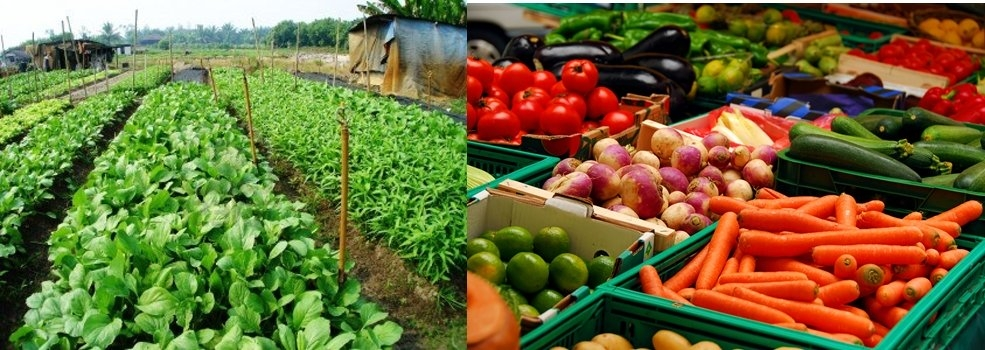 Food Production Harvesting And Consumption
