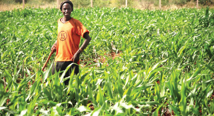 digital agriculture is transforming afria