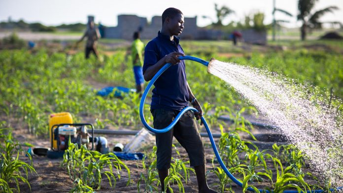 Africa and agricbusiness