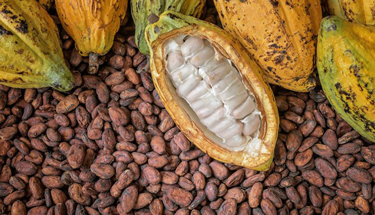 drop in cocoa demand