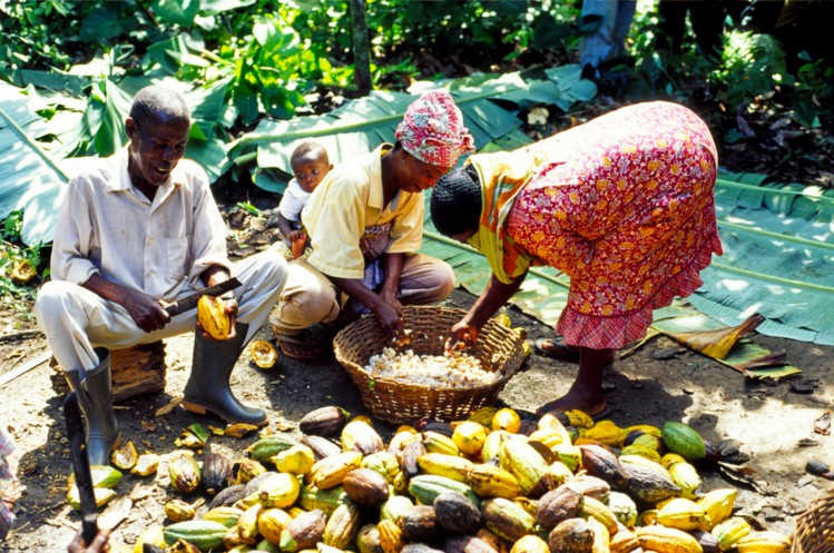 cocoa_farmers and their families, ghanatalksbusiness.com