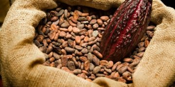 cocoa beans, sustainable cocoa, ghanatalksbusiness.com