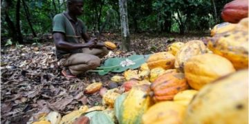 cocoa farmer, financial inclusion, cocoa software, ghanatalksbusiness.com